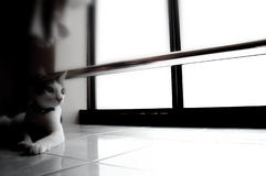 Cat. By window site in deep thought Stock Photos