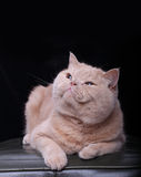 Cat. The cat in black background Royalty Free Stock Image
