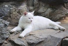 Free Cat Royalty Free Stock Photo - 20251465