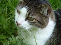 Cat. Closeup of a cat Stock Photos