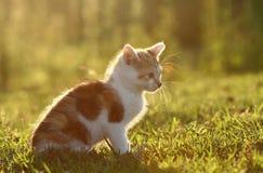 Cat Stock Image