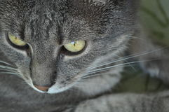 A cat. The look of a cat, with focus on his eye royalty free stock photos