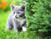 Cat. Little kitten playing on the grass Stock Photography