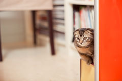 Cat. The cute cat at home Stock Photography
