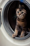Cat. The cute cat in Washer Stock Image