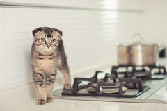 Cat. The cute cat at kitchen Stock Photos
