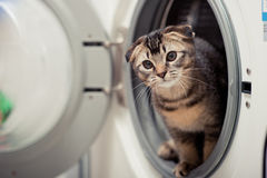 Cat. The cute cat in Washer Royalty Free Stock Image