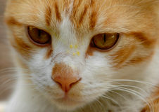 Cat. Closu up on a cat face royalty free stock image