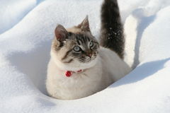 Cat. White cat in a snow Stock Image
