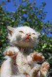 Cat. Close up of a cat Stock Photos
