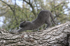 Cat. Gray domestic cat in the park Stock Photo