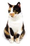 cat Στοκ φωτογραφίες με δικαίωμα ελεύθερης χρήσης