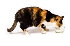 cat Στοκ Φωτογραφία