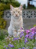 CAT. Cute cat sitting anong colourful flowers Royalty Free Stock Images