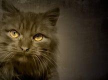 Cat stock photos