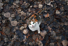 Cat. Beautiful cat with same colors as the leaves in the background Stock Photos