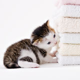 Cat. Young adorable kitten posing in my studio Royalty Free Stock Images