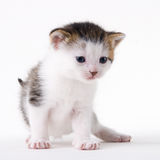 Cat. Young adorable kitten posing in my studio Stock Photo
