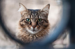 Cat. That looks into camera Royalty Free Stock Photos