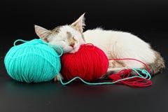 Cat. Sleeps on the tangle of thread Stock Photos