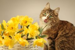 Cat. Young cat with yellow flowers Royalty Free Stock Image