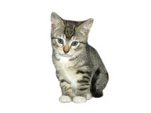 Cat. Young cat isolated, white background Stock Images