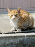 Cat. Single cat  crouching on the ground Royalty Free Stock Photo