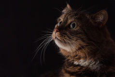 The cat. Handsome male looking thoughtfully into the distance Royalty Free Stock Images