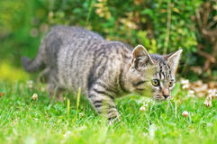 Cat. Young cat on the grass stock photography