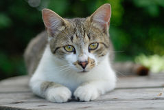 Cat. Small cat in the garden Royalty Free Stock Images