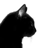 Cat. Black cat Stock Images