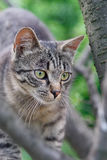 Cat. Small cat in the garden on tree Royalty Free Stock Photo
