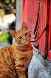 Cat. A cute cat sitting by the red door Stock Photos