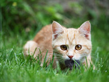 The cat Stock Images
