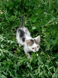Cat. A cat on a green field Royalty Free Stock Image