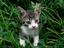 Cat. A cat in a green garden Stock Photography