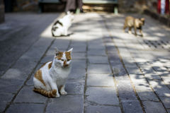 Cat. Some cats walk on the ground Royalty Free Stock Photos