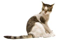 Cat. Sitting on white background Royalty Free Stock Photo