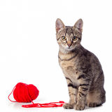 Cat. Tabby kitten playing red clew Royalty Free Stock Image