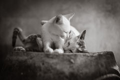 Cat. In black and white Stock Photos