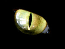 Cat. Feline eye on black background Royalty Free Stock Images