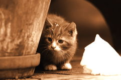 Cat. Cute Cat Look at Snow Place Stock Image