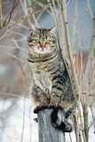 Cat. Sits on a wooden post royalty free stock photography