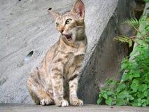 Cat. Meow Stock Photo