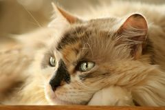 Free Cat Stock Images - 3035634