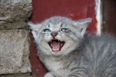 Cat. Kittens royalty free stock photos