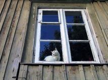Cat. In the window royalty free stock image