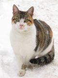 Cat. And snow royalty free stock photography