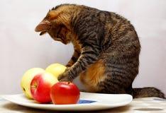 Free Cat Stock Photo - 3400200