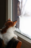 Cat. A kitten looking at snow Stock Photos